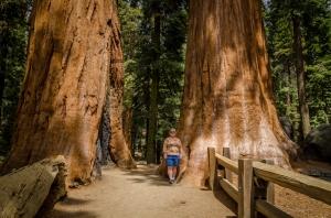 Sequoia National Park-5