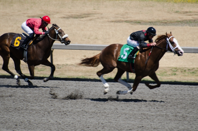 Emerald Downs-4