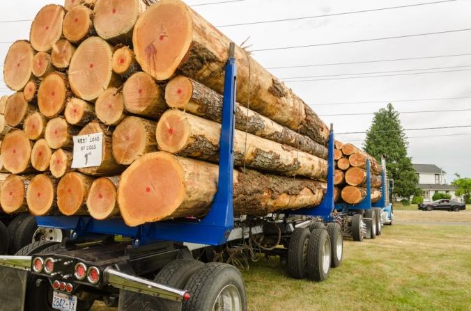 Log show-1