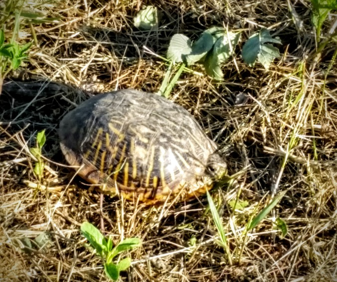 This turtle was just sitting next to the trail.
