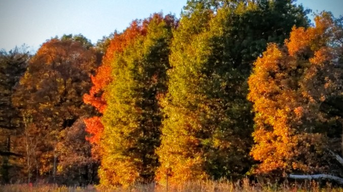 The fall colors are beautiful.