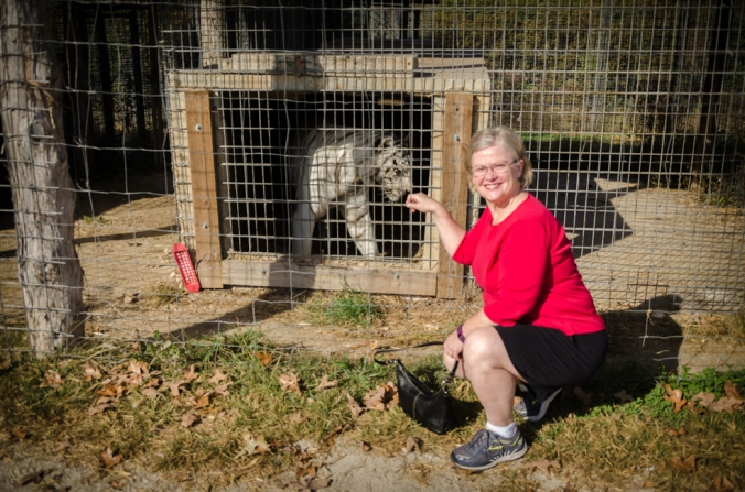 It looks like this tiger wants to take a bite out of Charlene!