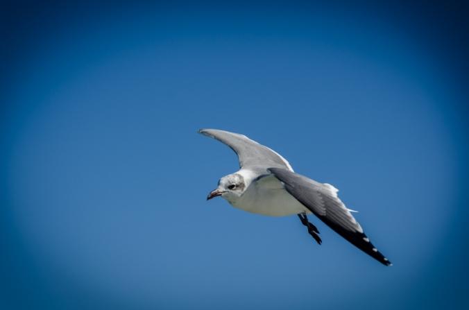 South Padre Island-4