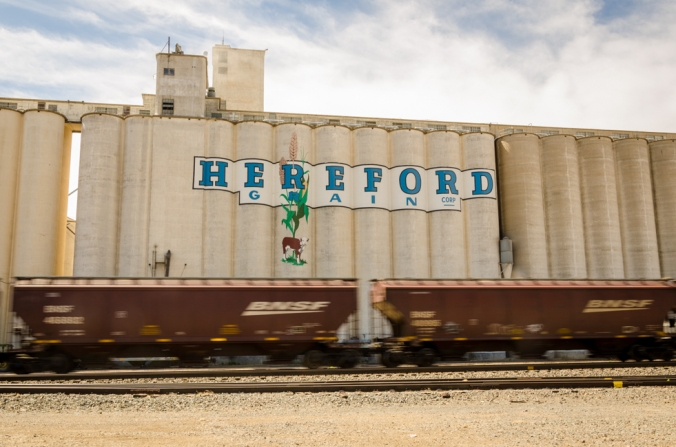 Hereford-1