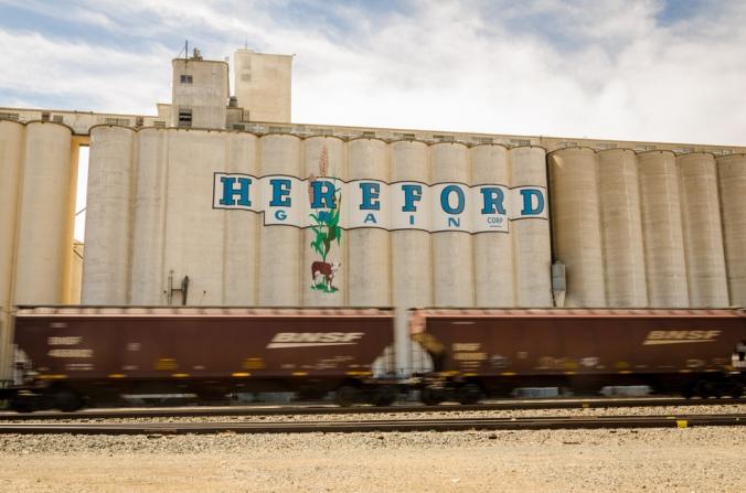 Hereford-1