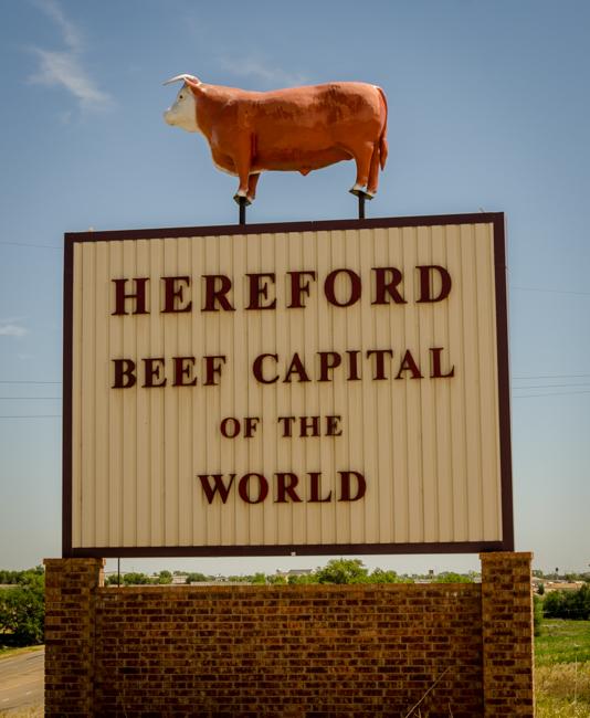 Hereford-2