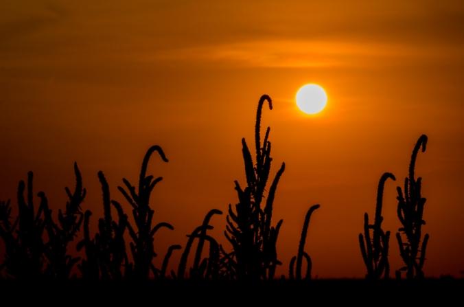 Sunrise-5