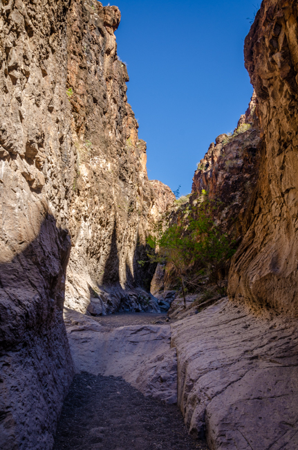 Big Bend Rnch State Park-4