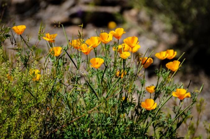 Picacho Peak-10