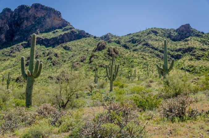 Picacho Peak-12