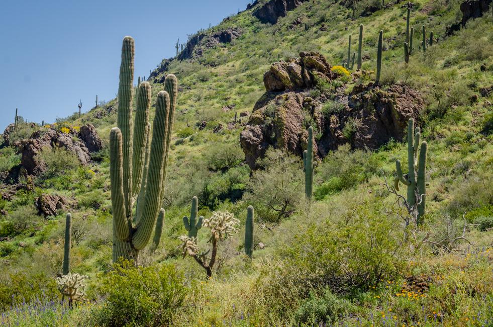 Picacho Peak-6